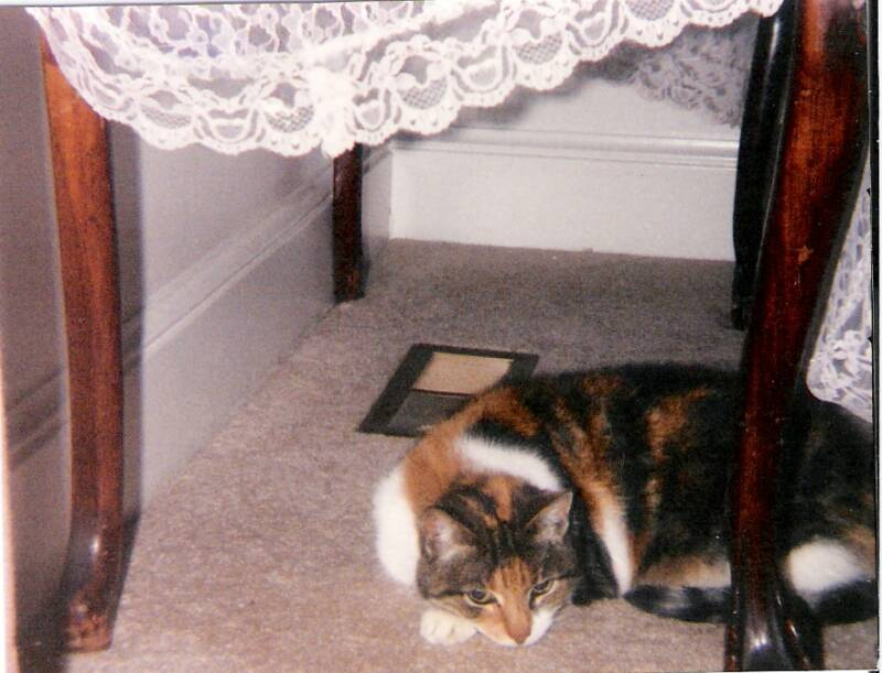 My Grandmother (Oliveto)'s old cat Kitty; she lived to be 17
