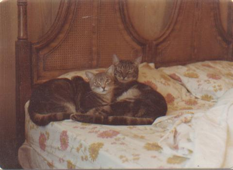 These two are the cats I had before Kurt & Sandy--Tulsa & Portnoy